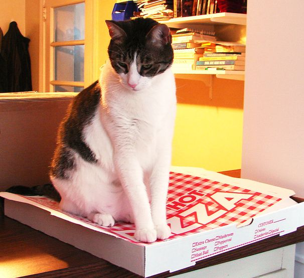Pizza Cat says you can't recycle this